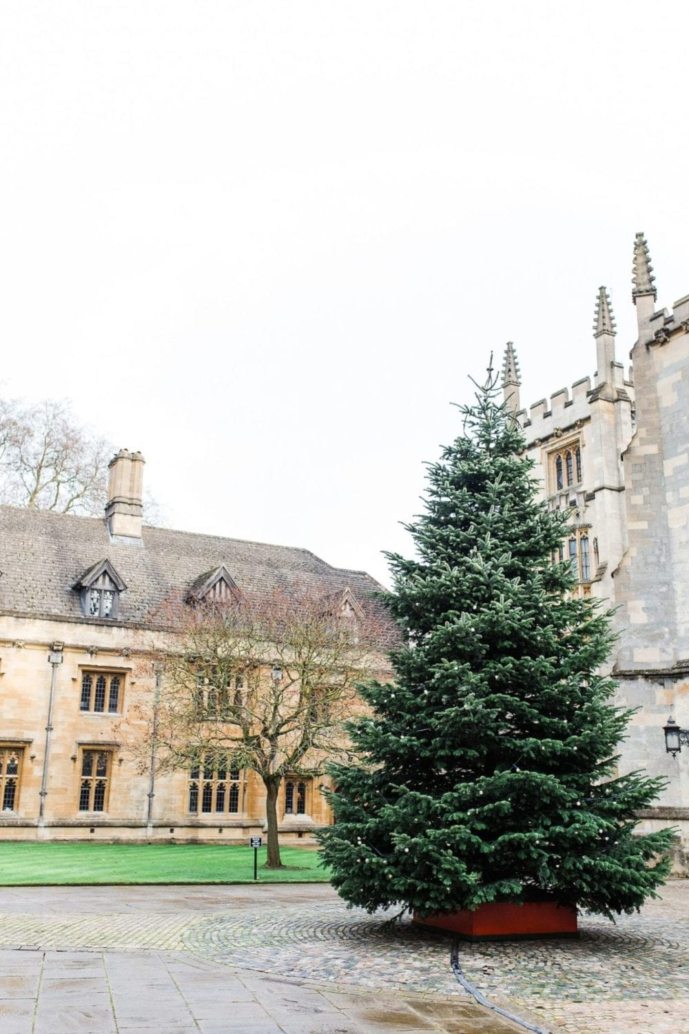 Magdalen College Christmas tree